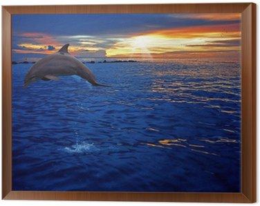 Framed Canvas Dolphin jumping