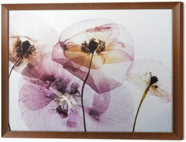 Framed Canvas dry poppies