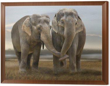 Elefant 003 Framed Canvas
