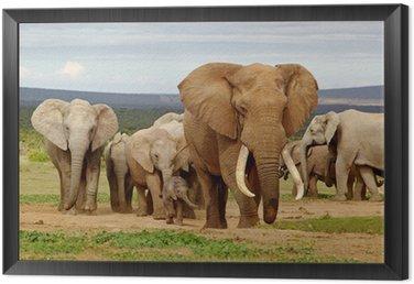 Elephant Herd Framed Canvas