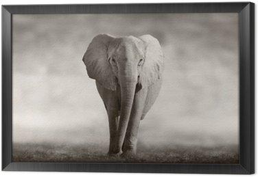 Framed Canvas Elephant