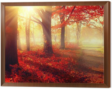 Framed Canvas Fall scene. Beautiful autumnal park in sunlight