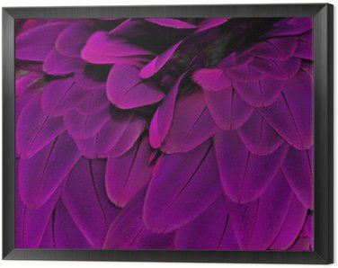Framed Canvas Feathers; Purple