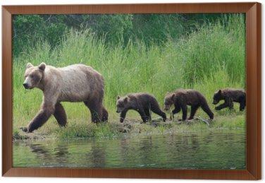 Female Alaskan brown bear with cubs