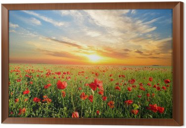 field with poppies Framed Canvas