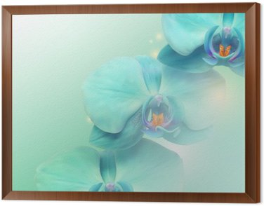 flower Orchid background