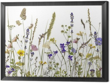 Framed Canvas flowers and herbs. An illustration can be seamlessly connect horizontally