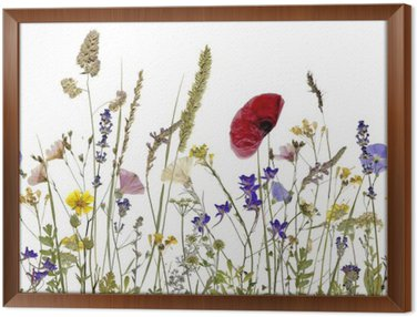 Framed Canvas flowers and herbs