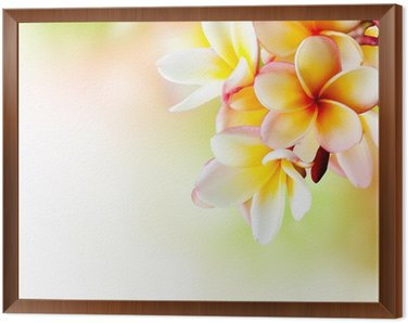 Framed Canvas Frangipani Tropical Spa Flower. Plumeria. Border Design
