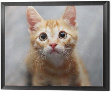 Framed Canvas ginger kitten