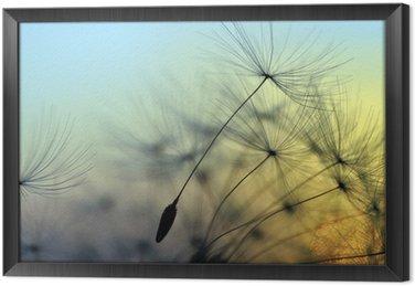 Golden sunset and dandelion, meditative zen background Framed Canvas