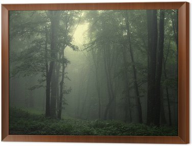Framed Canvas Green forest after rain