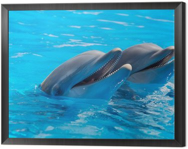 Framed Canvas happy dolphins