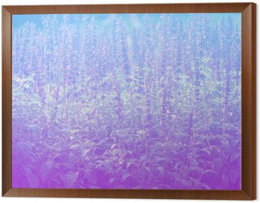 Framed Canvas Lavender in pastel styles.
