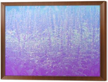 Lavender in pastel styles.