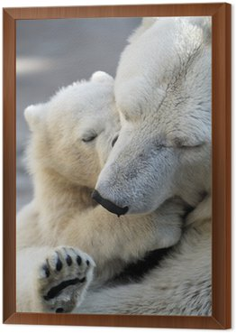 Framed Canvas Little polar bear cub playing with his mom