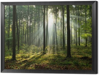 Framed Canvas Morning in the forest