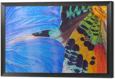 Multicolored butterflies wing