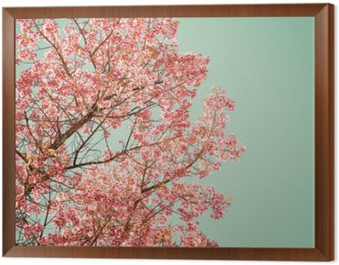 Framed Canvas Nature background of beautiful of tree cherry pink flower in spring - vintage pastel color filter