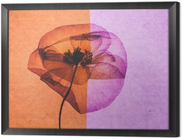 nice flower Framed Canvas