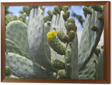 Framed Canvas opuntia - prickly pear