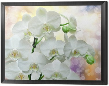 Framed Canvas orchid flower