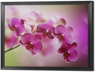 Framed Canvas Orchid