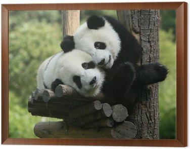 panda Framed Canvas