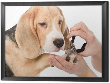 person cutting dog toenails. isolated on white background