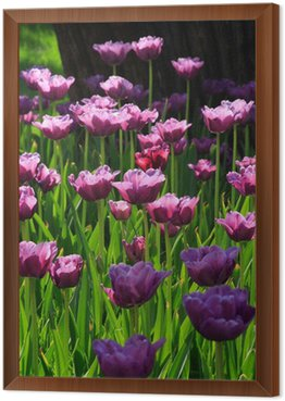 pink diamond tulips
