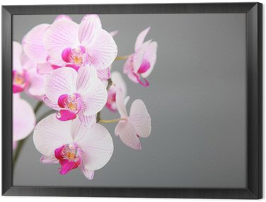 Framed Canvas Pink orchid