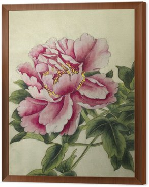 pink peony flower Framed Canvas