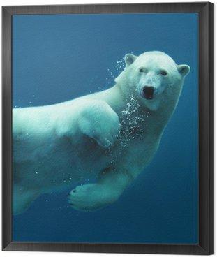 Framed Canvas Polar bear underwater close-up
