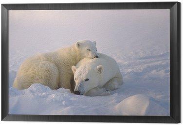 Framed Canvas Polar bear with her cub