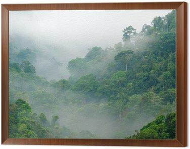 rainforest morning fog Framed Canvas