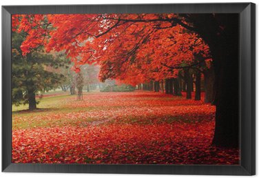 Framed Canvas red autumn in the park