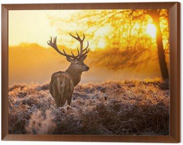 Framed Canvas Red Deer in morning Sun.
