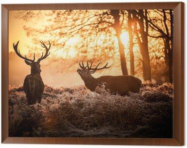 Red Deer in Morning Sun. Framed Canvas