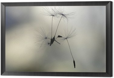 seeds in the air Framed Canvas
