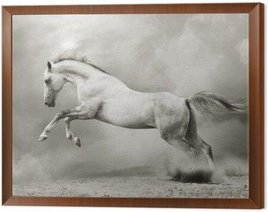Framed Canvas silver-white stallion on black