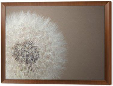 soft dandelion Framed Canvas
