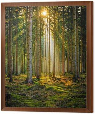Sonnenstrahlen im Nadelwald im Morgennebel
