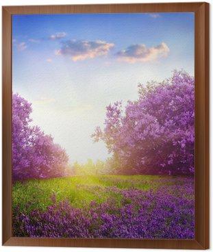 spring landscape Framed Canvas
