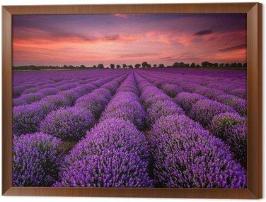 Framed Canvas Stunning landscape with lavender field at sunset