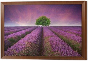 Framed Canvas Stunning lavender field landscape Summer sunset with single tree