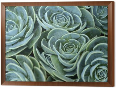 Framed Canvas succulent plant