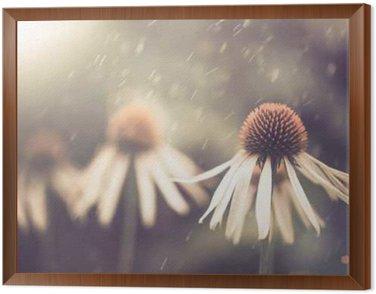 Framed Canvas summer flower under rain