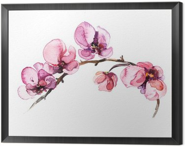 Framed Canvas the watercolor flowers orchid isolated on the white background