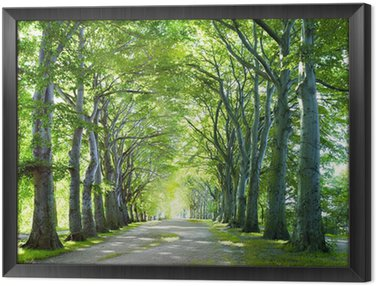 Framed Canvas the way in forest