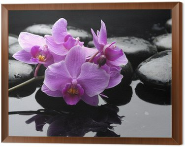 therapy stones and orchid flower with water drops Framed Canvas